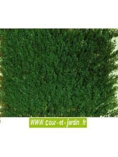haie artificielle thuya vert fonc en plaques de 50cmx50. Black Bedroom Furniture Sets. Home Design Ideas