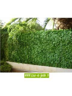 Haie artificielle feuilles de Lierre   ht 150cm (x 3ml) simple face